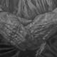 Despre generarea  lui Dumnezeu  în Sfânta Treime (III) (exercițiu de logică)